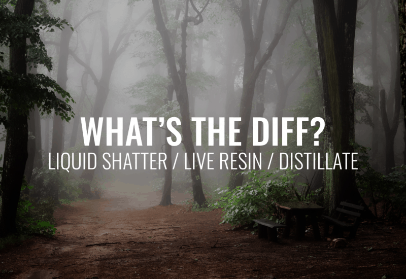 What is the difference between our liquid shatter, live Resin and distillate?