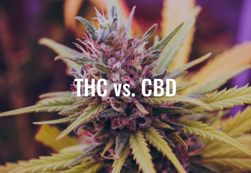 Benefits Of THC - Benefits Of CBD isolate - Benefits Of Full Spectrum CBD