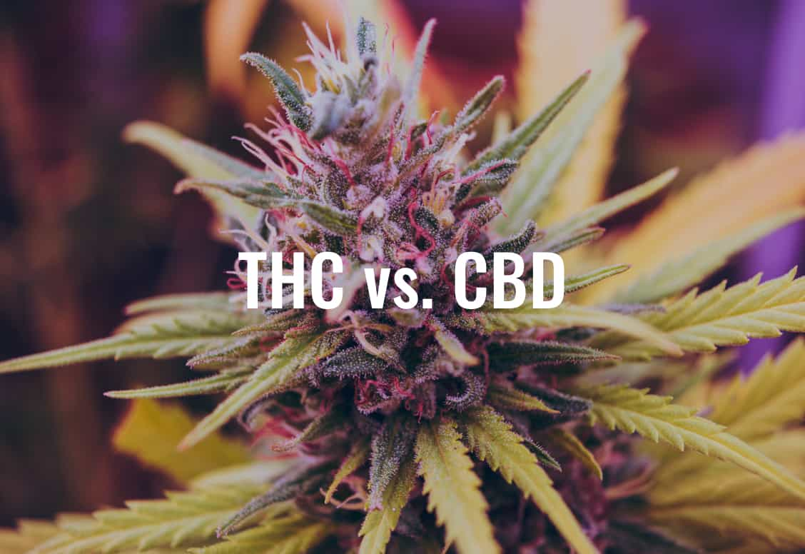 Benefits Of THC - Benefits Of CBD isolate - Benefits Of Full Spectrum CBD