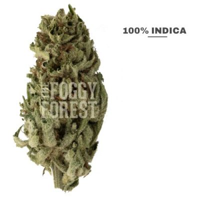 Buy Black Domina Top Shelf Cannabis Flower Online Canada | The Foggy Forest