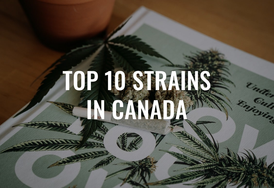 The Top 10 Strains in Canada