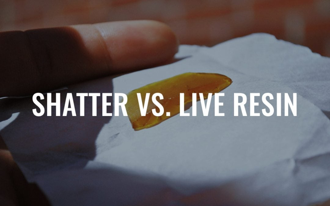 Shatter vs. Live Resin: What's the Difference?