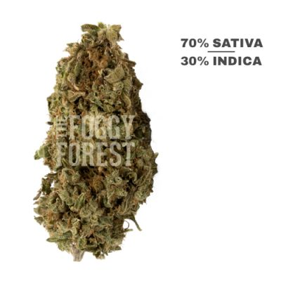 Buy Super Lemon Haze & Marijuana Strain in Canada (2021)