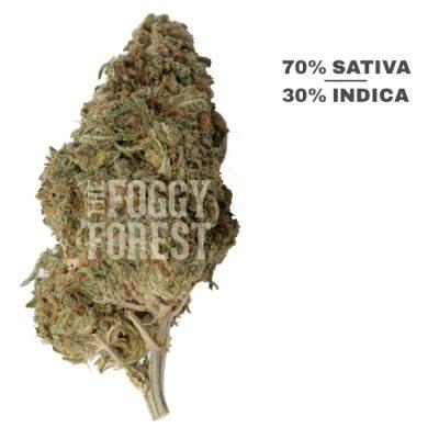 Buy Yukon Gold & Marijuana Strain in Canada (2021) - The Foggy Forest